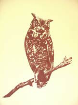 """Who Dat?"", a serigraph of an owl by Amy Glover Martin"