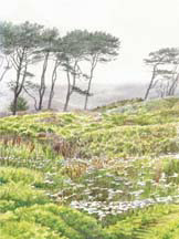 """Coastal Fog"", a watercolor painting by Carol Riddle"